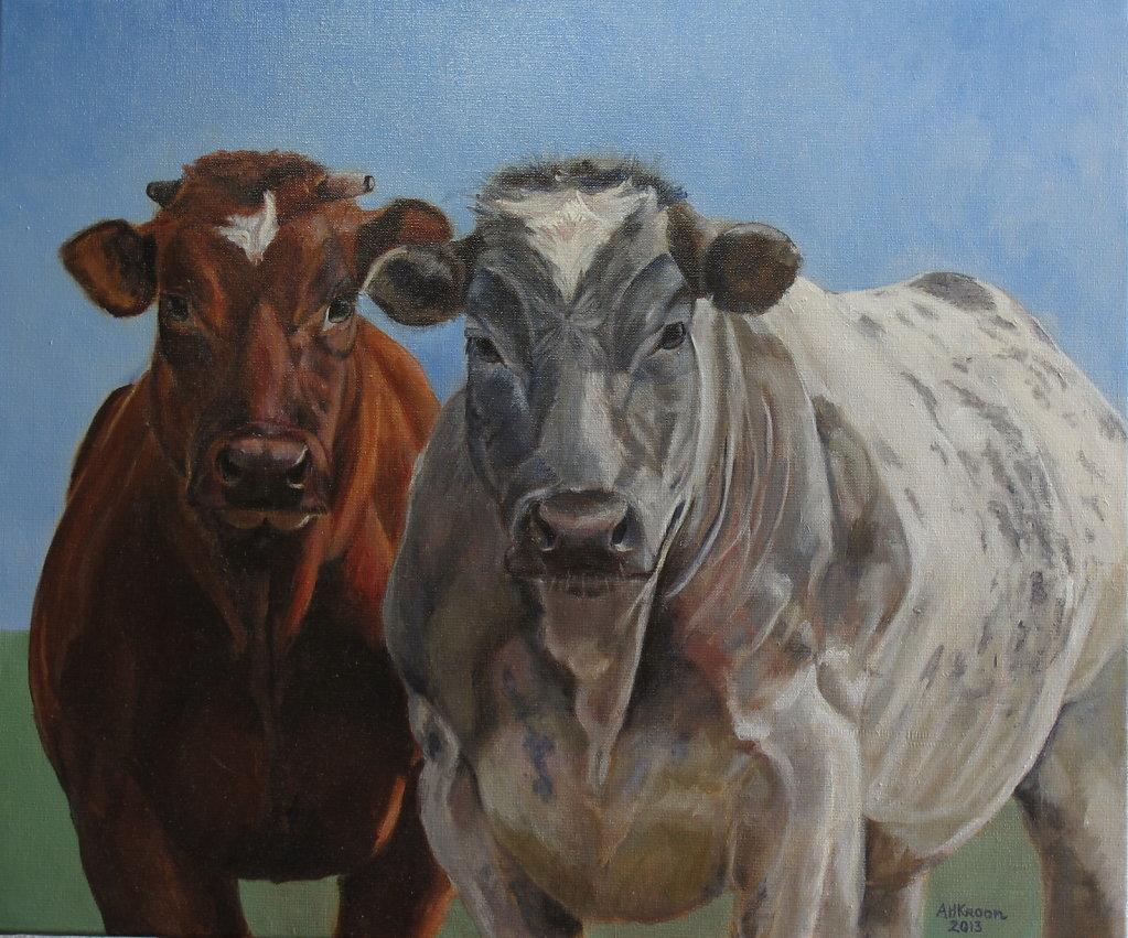 2 koeien, 60 x 50, olieverf op doek, prijs op aanvraag